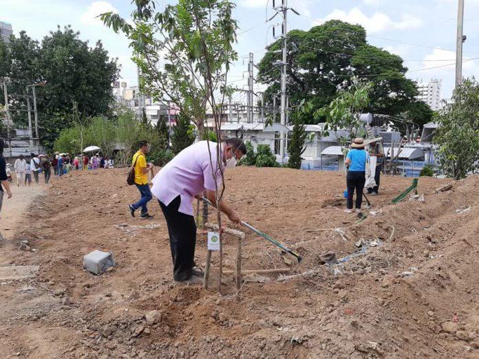 Tree Planting Chiang Mai