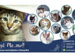 Adopt Me-ow
