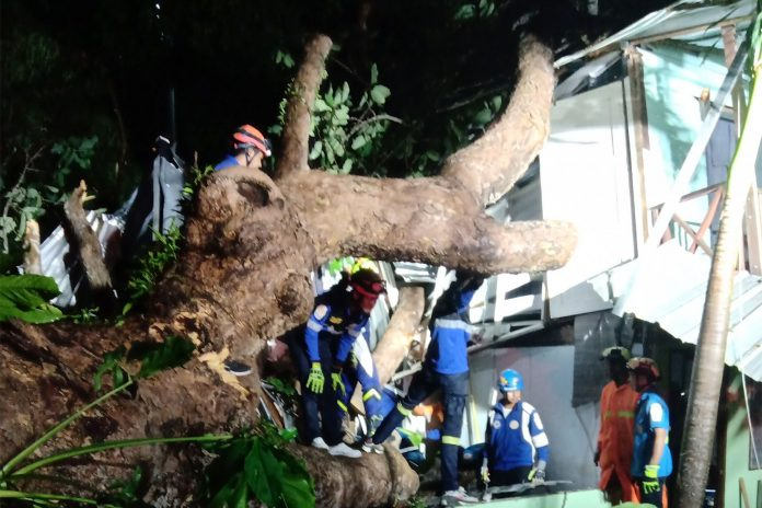 Two Killed By Falling Trees