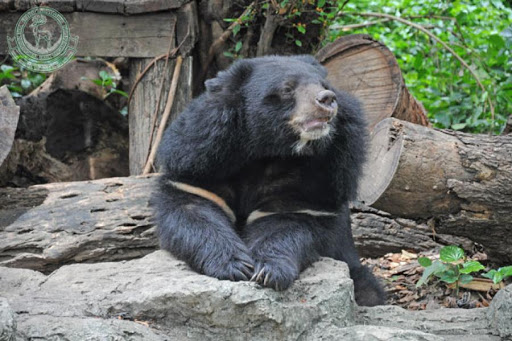 Black Bears Khon Kaen