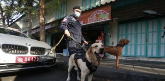Sniffer Dogs Search For Drugs