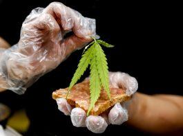 Cannabis Dishes