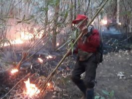 Forest Fires Chiang Mai