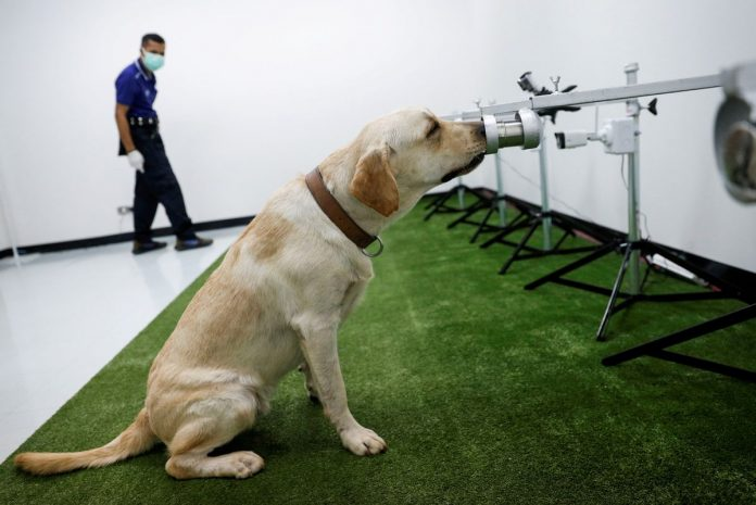 COVID-19 Sniffer Dogs Deployed
